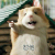 史上最帅的一只田鼠