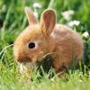 处于函数叠加状态的边边兔